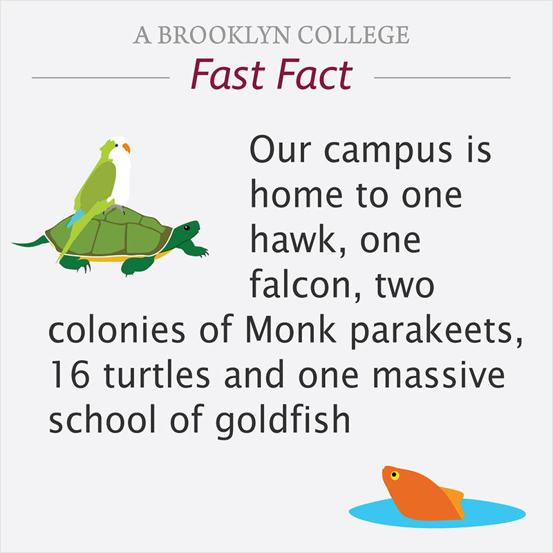 Fast Fact: Our campus is home to one hawk, one falcon, two colonies of Monk parakeets, sixteen turtles and one massive school of goldfish